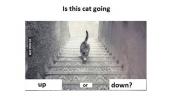 Kedi İniyor mu? Çıkıyor mu?