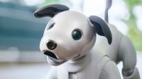 Karşınızda sevimli robot köpek Sony Aibo!