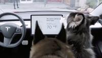 Tesla'dan köpeklerin ölümüne neden olabilecek hata!