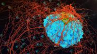 Bilim insanları yanlışlıkla kansere çare bulmuş olabilir!